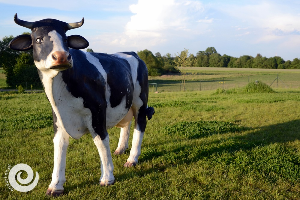 symulator dojenia krowy na imprezy dla dzieci lub dorosłych - poznań, warszawa